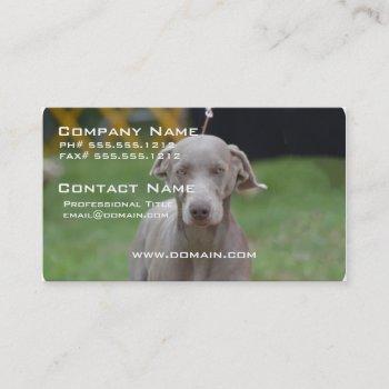 adorable weimaraner business card