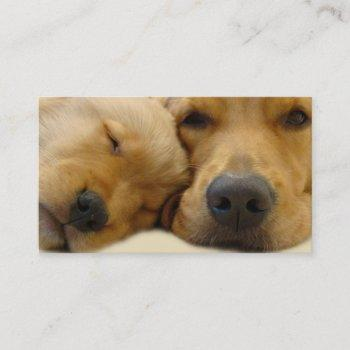 golden retriever breeder business card