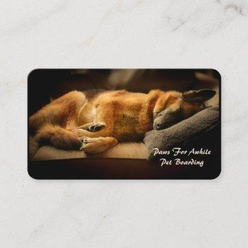 gorgeous sleeping german shepherd on couch business card