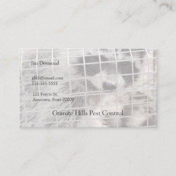 raccoon in a trap business card